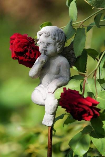 rosenstan engel