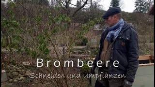 brombeere-schneiden3SRDomiW5ic7q